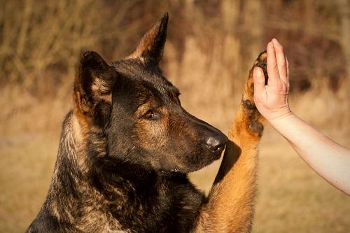 hundepensionen in oberfranken